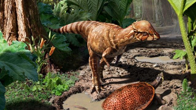 [Ciencia] Este es el mas viejo Piquicefalosaurio conocido.
