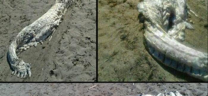 [¿!GUAT¡?] Extraña criatura aparece en playas de España.
